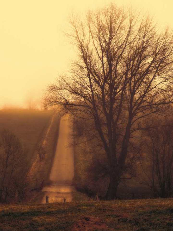 Morning mist at Lejre